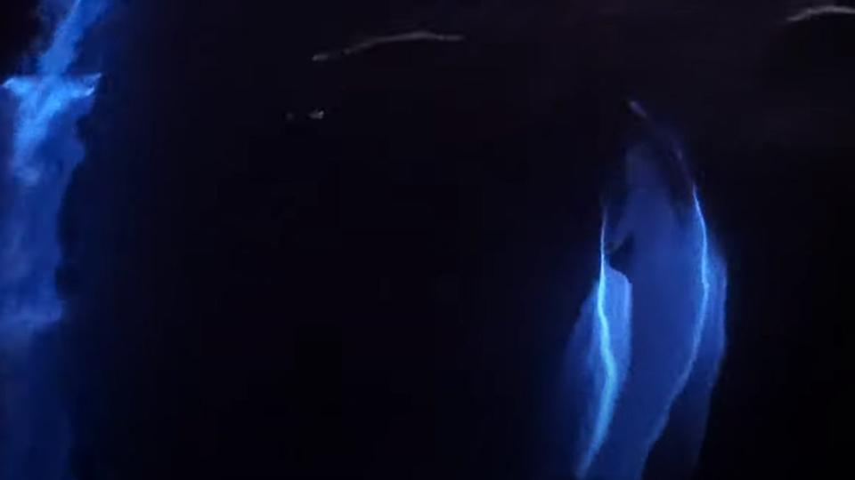 Stunning new 4K video of dolphins swimming in blue bioluminescence ...