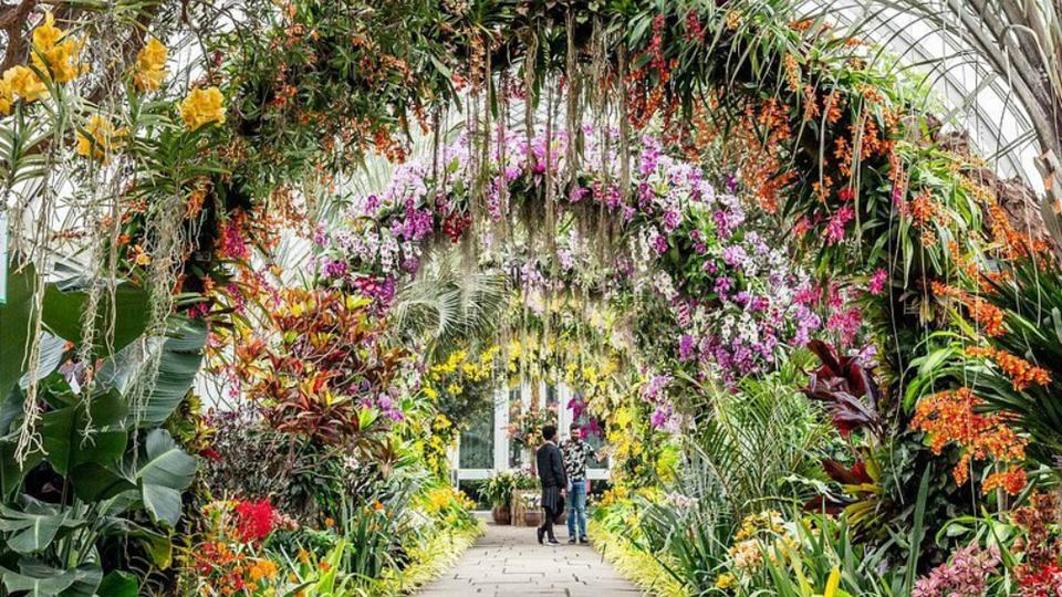 The Annual Orchid Show Returns To The New York Botanical Garden In