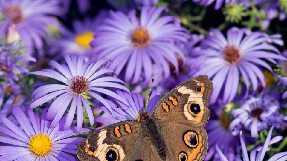 These 5 Easy Care Flowers And Herbs Will Attract Pollinators To