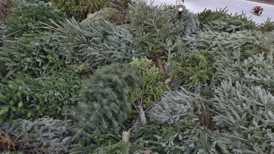 Fort Macon Christmas Trees 2020 Fort Macon accepts natural Christmas trees   News Break
