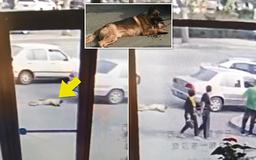 Chinese man drags a German Shepherd behind his car by the neck while driving on a busy road as 'he fears the dog will bite him'
