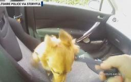 Police officer smashes window to save dog locked in hot car