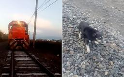 Train stops just in time before hitting a dog that had been chained to the tracks after driver spots the animal and hits the brakes