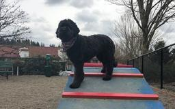 Pop-up dog parks coming to Vancouver this summer