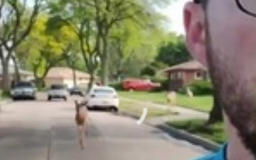 Jogger's deer parade video goes viral: 'These are my pets!'