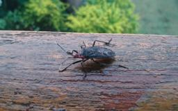 CDC warns of 'kissing bug' in Indiana