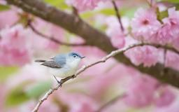 The Best Birding Apps to ID and Track Your Bird Sightings