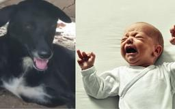 15-Year-Old Mom Buries Newborn Baby Alive, Then This 3-Legged Dog Comes To The Rescue