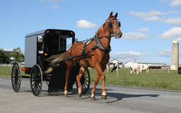 2 young children killed when drunk driver hits Amish buggy, police say