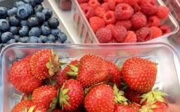 Champaign Farmers Market is offering free healthy snacks for kids