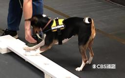 Cancer detection dogs training in Alabama