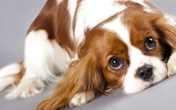 How to manage your dog's mitral valve disease