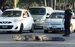Snap decision: Policeman stops traffic to let huge crocodile walk across busy road to get back its lagoon in Mexico