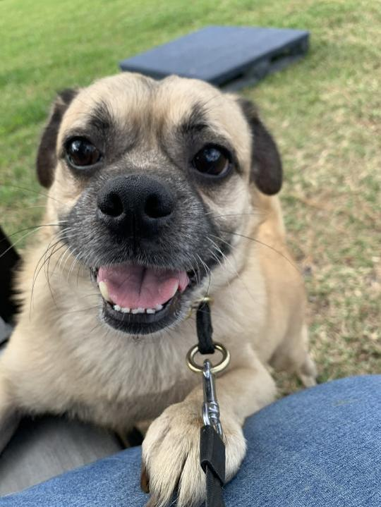 Mascota en Miami adopción