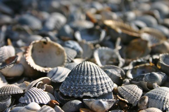 Best Beaches for Seashells in New England