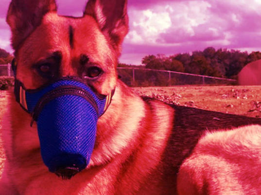 Officials Confirm That a Dog Tested Positive For Coronavirus | News Break