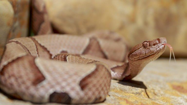Venomous snakes bit 92 people in North Carolina in May, slightly more than average