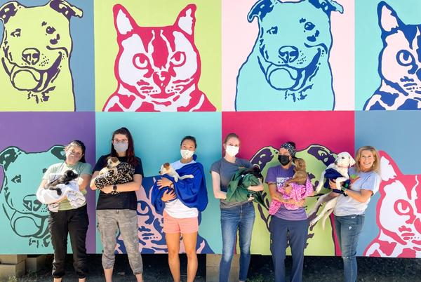 Picture for Clear the Shelters: Several puppies named after TODAY Show hosts up for adoption at Austin Pets Alive!