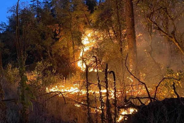 Picture for Fire crews battling Fawn Fire as winds calm Friday