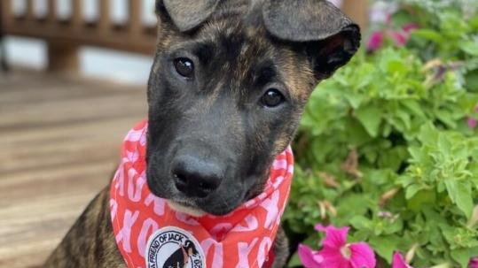 Picture for Dogs available for adoption in Denver