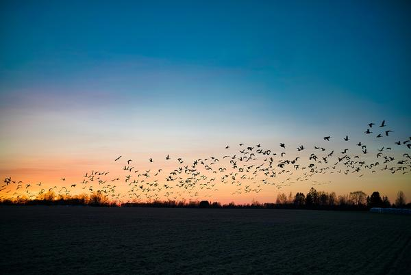 Picture for Turn Off Your Lights: Help 12.9 Million Birds Migrate Safely Over Indiana