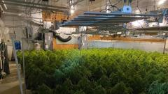 Cover for Green Gold Rush: Illegal multi-state grow operation shut down in rural Oklahoma
