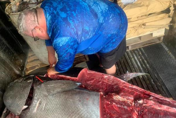 Picture for A Belfast fisherman accidentally caught a 600-pound tuna