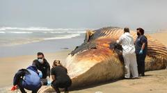 Cover for As cargo shipments boom, ship strikes imperil whales in California and worldwide