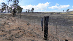 Cover for Governor Declares Emergency For Hawaiʻi Brush Fire