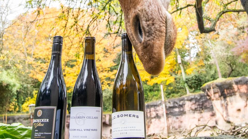 New wine club raises money for the Oregon Zoo when it needs it the most
