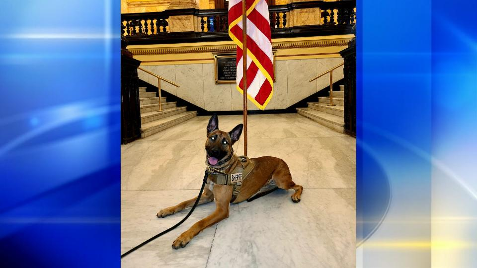 Picture for Washington County Sheriff's Office welcomes newest four-legged team member