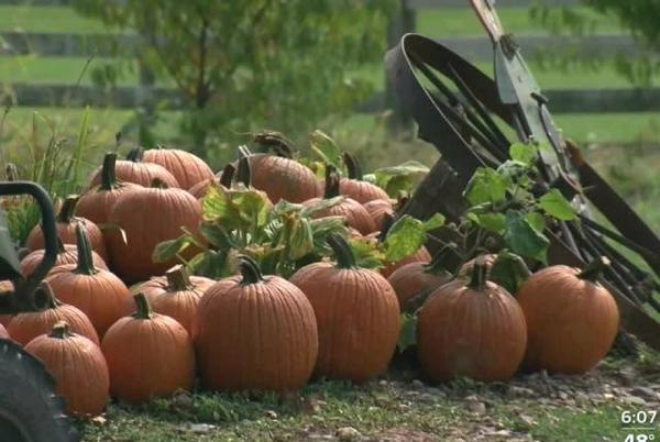Picture for Fall events kick off at Bellevue Berry Farm