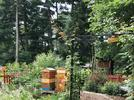 Picture for 'Pollinators Welcome' this week's Garden Photo Contest winner