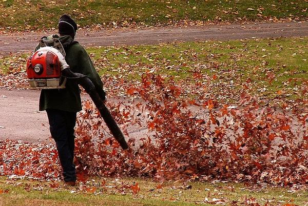 Picture for Leaf Blower Ban Debated