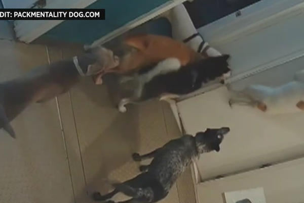 Picture for THE GREAT ESCAPE: Clever Pup Facilitates Breakout From New Jersey Doggy Day Care