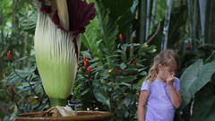 Cover for Rare Illinois Corpse Flower Blooms in Impressive Time-Lapse Video