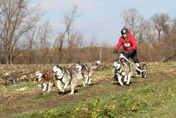 Picture for Chicago's Dog Mushers Are Preparing For Their Next Big Race — And You Don't Need To Go Far To See It
