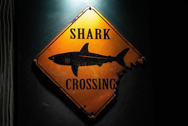 Picture for Why Kentucky Appears on a List of States That Have Reported Shark Attacks