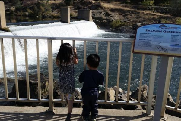 Picture for Watch In Awe As Thousands Of Chinook Salmon Make Their Seasonal Return To This Fish Hatchery In Northern California