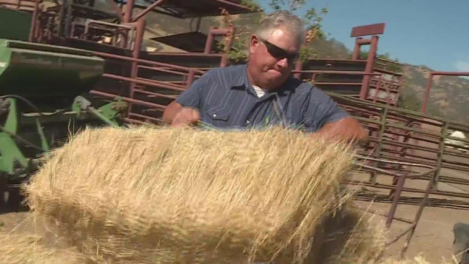 Picture for Ranchers Selling Off Cattle In Order To Stay Afloat During Drought