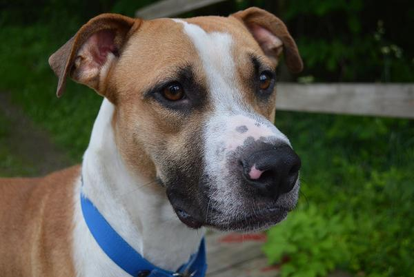 Picture for Pittsburgh Pet of the Week: Meade