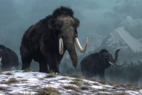 Picture for Is it possible to 'revive' mammoths to fight climate change? – business season