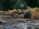 Picture for Investigators: Sparks from Trailer Likely Cause of Brush Fire on Highway 99E