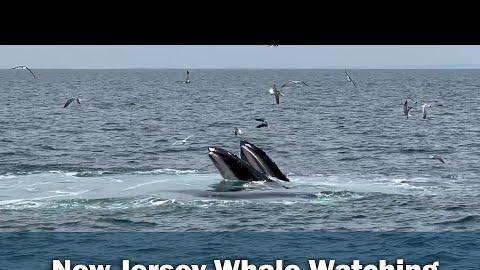 Picture for Hoboken Resident Captures Video Of 3 Whales Eating During Fishing Trip On Jersey Shore