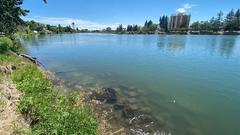 Cover for Good Samaritans rescue intoxicated woman from the Snake River in Idaho Falls