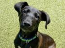 Picture for ADOPT ME! Life is better with a dog! Adopt Frankie!