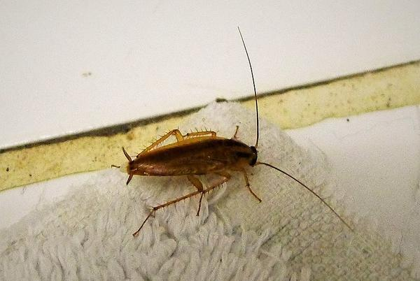 Picture for 10 Best Methods to Eliminate Cockroaches from Your Property