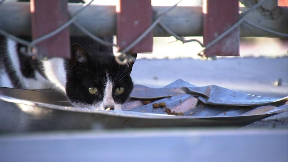 Picture for 'It's a mystery': Feral cats in SF colony turn up with unexplained severed legs