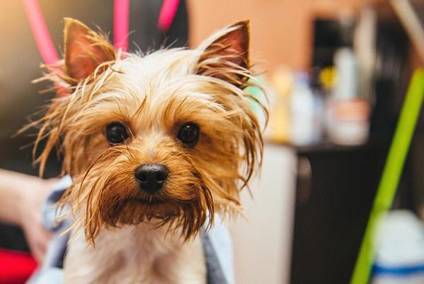 Picture for Top 10 Easiest Dog Breeds to Train
