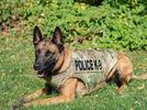 Picture for Lebanon Police: K-9 and officers hit by unruly man